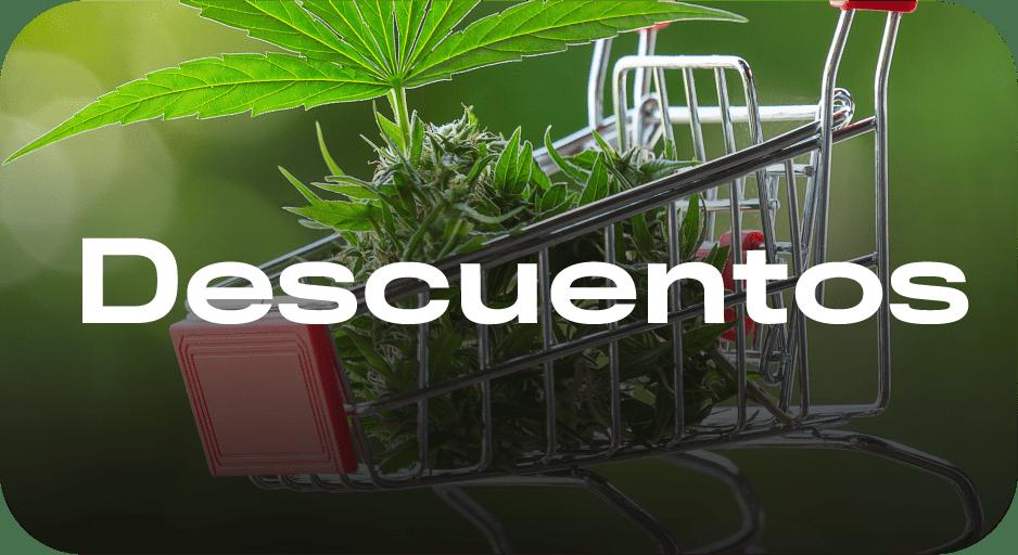 Curso de cultivo - Aprende a cultivar cannabis porr cbd aprender a cultivar curso de cultivo kit cultivo indoor marihuana