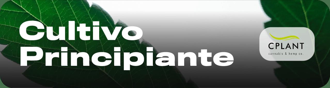 curso de cultivo cbd marihuana porro como cultivar marihuana cbd porro