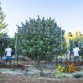 Ventajas de cultivos outdoor